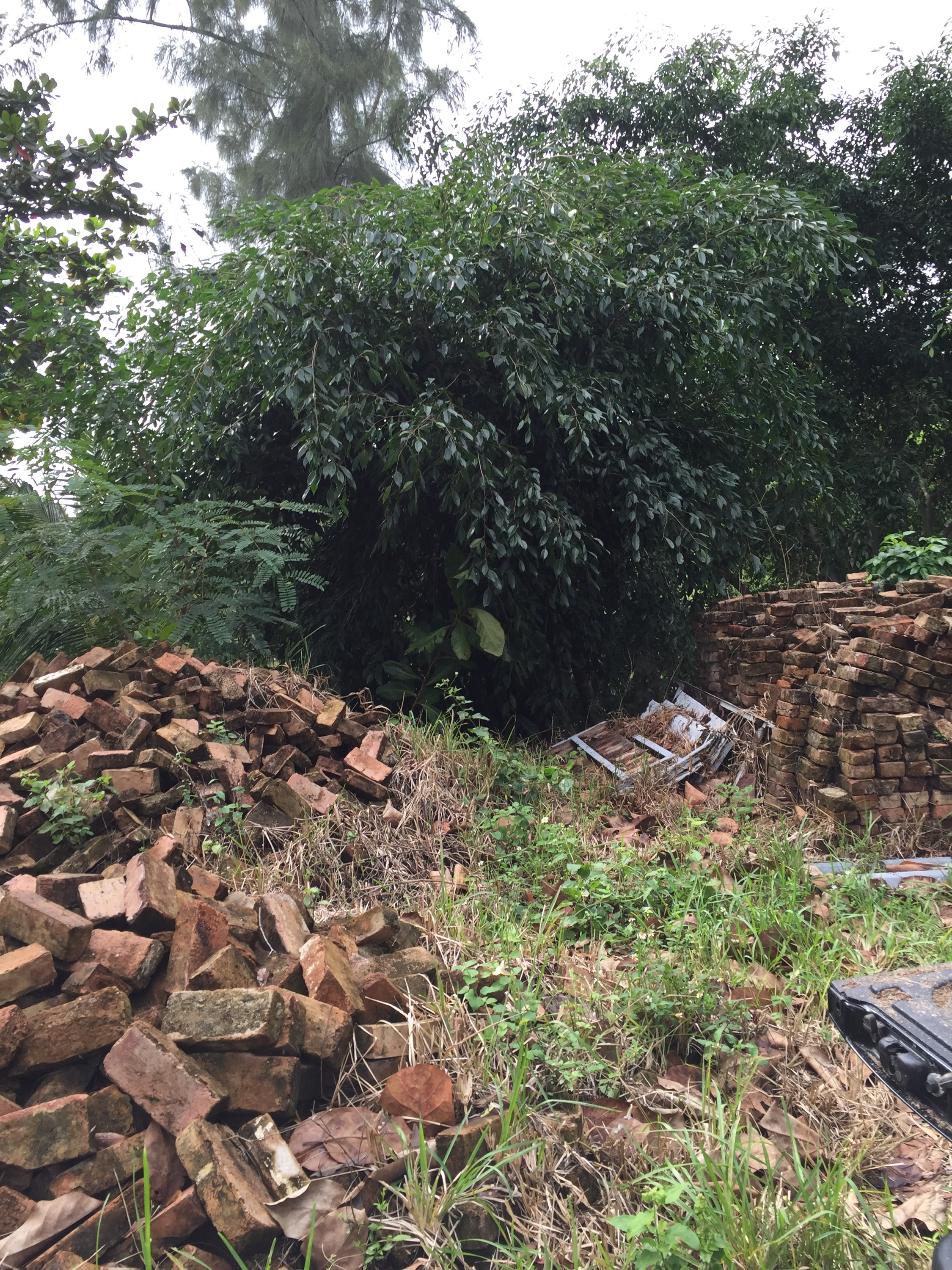 west palm stump removal